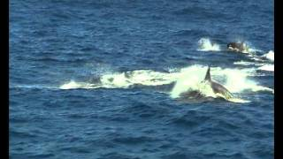 getlinkyoutube.com-Animal Communication: Whales and Dolphins