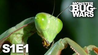 getlinkyoutube.com-MONSTER BUG WARS   Death at Midnight   S1E1