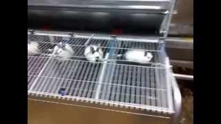 getlinkyoutube.com-Здание крольчатника - ангар арочный утеплённый тентовый