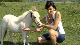 getlinkyoutube.com-Мини Лошади