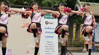 Cheerleading girls 女子大生の可愛すぎるチアダンス JEWELS (ジュエルズ) 京都学生祭典