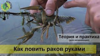 getlinkyoutube.com-Как и где ловить раков руками – правила ловли в норах и камнях