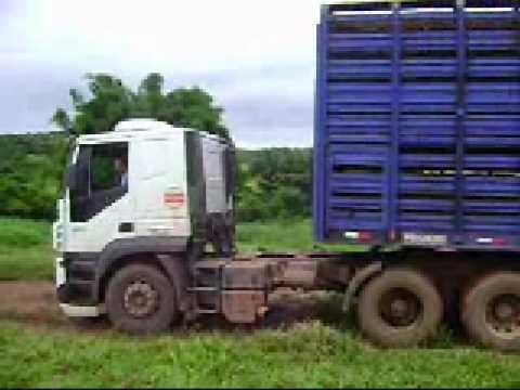 (VIDEO-1) Caminhão Boiadeiro Araguaina-To