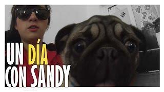 getlinkyoutube.com-Un día con SANDERS / SandyCoben