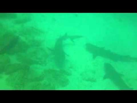 Ecuador duiken Mosquira ilja met haaien