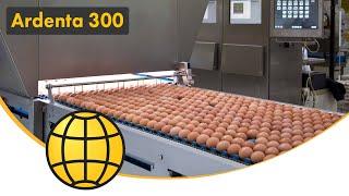 getlinkyoutube.com-Egg Grading and Packing Machine - Ardenta 300