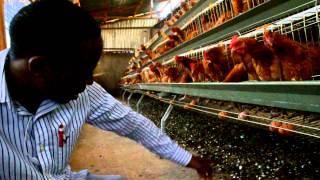 getlinkyoutube.com-chicken cages in kenya  (http://westgateintegrity.com/)