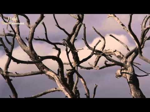 মাটির বাড়ি, মাটির ঘর- Bangla Islamic song (emotional)