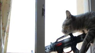 getlinkyoutube.com-Gato disparando a Personas Sniper Cat EPIC FAILS