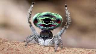 Örümceğin böylesine güzel ve keyiflisini görmediniz!