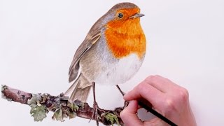 getlinkyoutube.com-How to paint a detailed feathers on this orange chested Robin