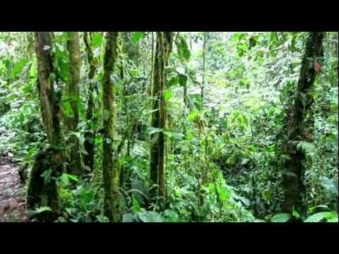 San Jorge Ecolodge Milpe Ecuador