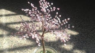 getlinkyoutube.com-Sakura. Die japanische Kirschblüte. Bäume aus Perlen.