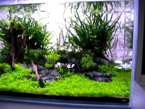 Swedish, planted, opti white -tank