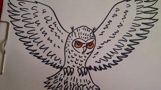 getlinkyoutube.com-Como dibujar un buho. Como hacer un dibujo para principiantes. Como desenhar uma coruja