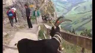 getlinkyoutube.com-Alpine Pastures