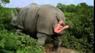 ดูกันจะจะ แรดคลอดลูก (rhino birth)