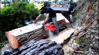 getlinkyoutube.com-Felling a big pine tree & milling slabs with a Chainsaw Mill