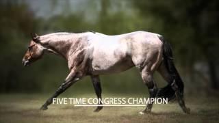 getlinkyoutube.com-VS Flatline: 2010 Bay Roan AQHA Stallion