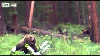 getlinkyoutube.com-ロシア ハンター ライフル 熊 クマ ヒグマ グリズリー 速い 襲いかかってくる