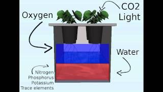 getlinkyoutube.com-Off the grid hydroponics: the Kratky method