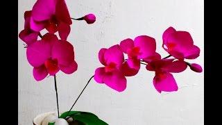 getlinkyoutube.com-Easy Paper Flowers Orchid Phalaenopsis / Moth Orchid (flower # 91)