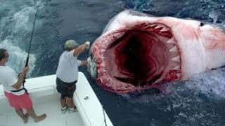 getlinkyoutube.com-GOD SAVES MAN FROM GREAT WHITE SHARK ATTACK