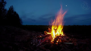 getlinkyoutube.com-🎧 Campfire Night Sounds In The Great Outdoors With Owls & Crickets Ambiance For Sleep And Relaxation