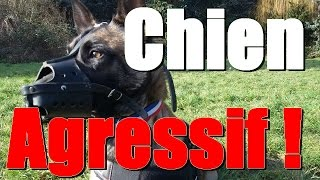 CHIEN AGRESSIF MALINOIS  JEEP