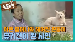 getlinkyoutube.com-TV동물농장 587회 #4