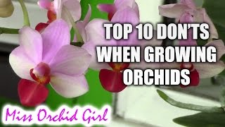 getlinkyoutube.com-Top 10 DON'Ts when Growing Orchids - tips for orchid beginners