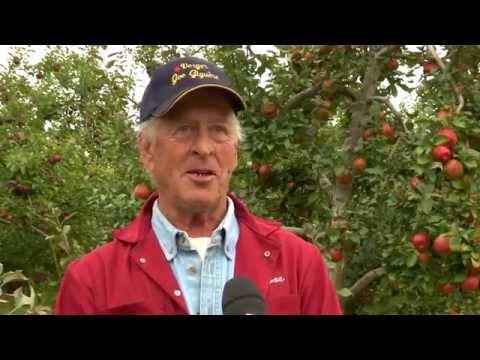 Une belle saison pour la pomme au Verger Joe Giguère