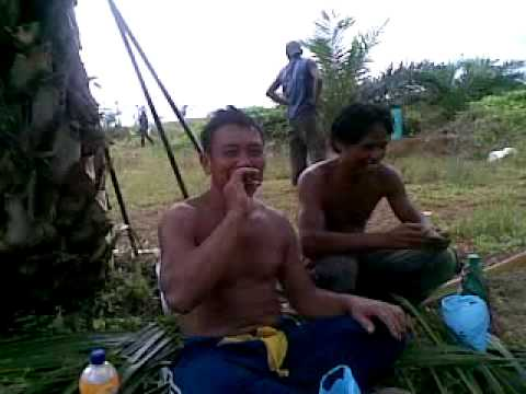 Video wawan cara de kebun sawit