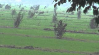 getlinkyoutube.com-Wildboar Hunt New Jatoi Jan 2012