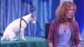 getlinkyoutube.com-very smart dog..mathemathical