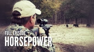 getlinkyoutube.com-Texas Hog Hunting with Suppressed Rifle | Horsepower