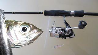getlinkyoutube.com-アジング初心者が最初の1尾を釣るまでのファーストステップ!ジグヘッド単体&ワームで常夜灯付近に群がるアジを釣る為のタックルを具体的に動画でお伝えします。実釣シーンあり