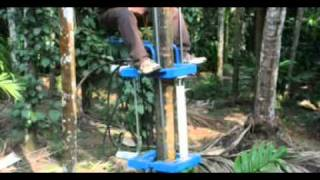 getlinkyoutube.com-Areca Palm Climber.DAT