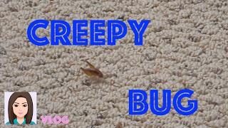 getlinkyoutube.com-Vlog 404: Creepy Bug In My Basement