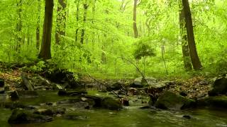 getlinkyoutube.com-60 minutes of Woodland Ambiance (Nature Sounds Series #4) Trickling Stream & Birds Sounds