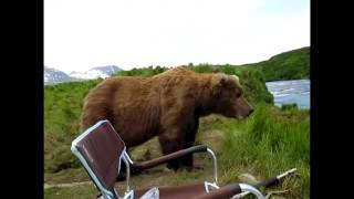 getlinkyoutube.com-ヒグマが人を襲う瞬間 1 The moment a person is seized with a Grizzly