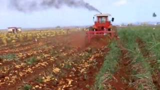 getlinkyoutube.com-Potato digger. 2 Rows /Arrancadora de patatas. 2Hileras /Arracheuse pommes de terre. ID-david