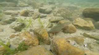 getlinkyoutube.com-ゴロタ石のエリアで根掛かりした時、ワームはどうなってるのか