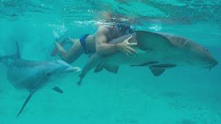 JoJo the Shark Killer width=