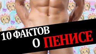 getlinkyoutube.com-10 ФАКТОВ О ПЕНИСЕ, КОТОРЫХ ТЫ НЕ ЗНАЛ