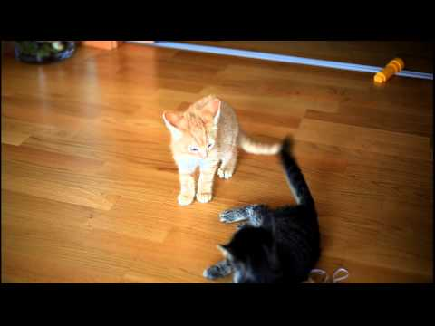 When cats attack - Very funny compiliation of cats attacking!