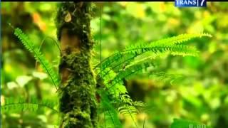 getlinkyoutube.com-Jejak Petualang Suku Dayak Kenyah