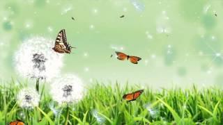 getlinkyoutube.com-Giới thiệu video nền thiên nhiên đẹp cho Proshow 2015.n2