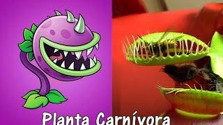 getlinkyoutube.com-Plants Vs Zombies 2 Plantas en la Vida Real con Imágenes SEGUNDA PARTE