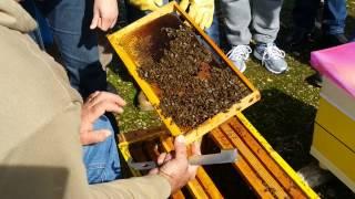 getlinkyoutube.com-Μελισσοκομία για νέους - Επιθεώρηση στις αρχές της άνοιξης